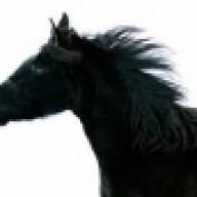 darkhorse85 profile image