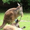 Porto zoo - Zoo da Maia