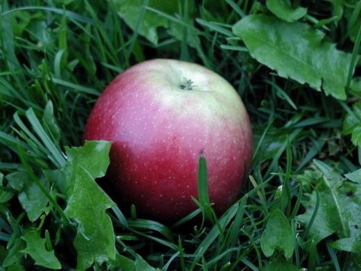 pink apple public domain