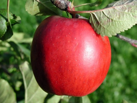red apple public domain