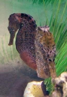 Seahorse photo taken at SeaWorld - Orlando, Florida