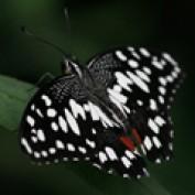 Joanna3 profile image