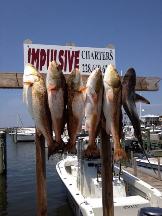 Deep Sea Fishing catch in the Gulf Coast waters of MS