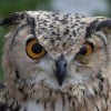 HJtheNightOwl profile image
