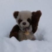 LucyBear profile image