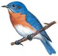Our State Bird The Blue Bird