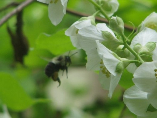Flower to bee