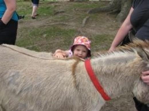 Miniature donkey (photo by Sandra Wilson)
