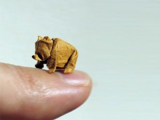 Tiny wet fold bear!