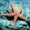 starfishfelix lm profile image