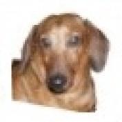 PEANUT857 profile image