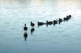 Lead Ducks Lead