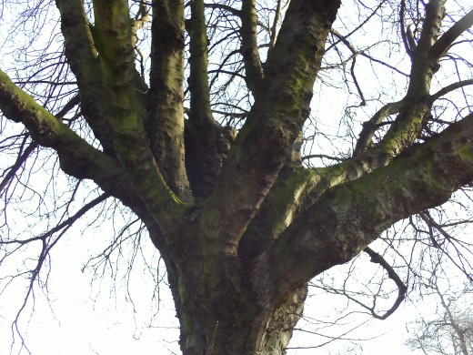 I like to take photos of the branches joining the tree trunk.