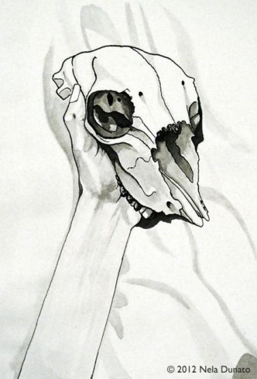 Sheep skull drawn using pen, brush & bottled ink