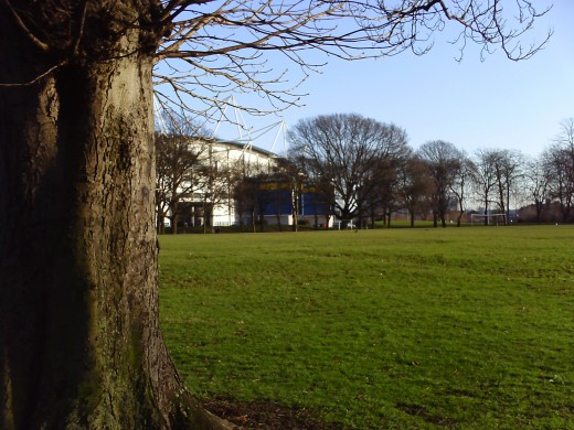 Wide shot of the park, with a cheeky tree at the side.