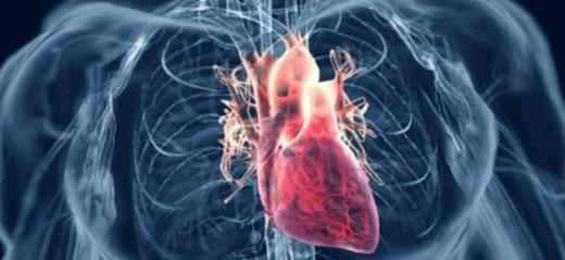 Medical Quiz: Cardiovascular system