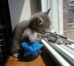 Kittens with Guns for Macho Guys