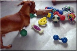Dog toys and supplies that Dachshunds love