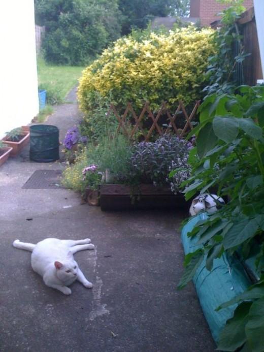 Jasper In Overgrown Garden