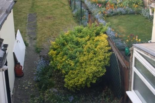 Big Ugly Bush In Flowerbed