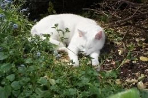 Jasper Asleep In Flowerbed