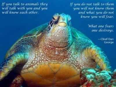 Talk to the Animals!
