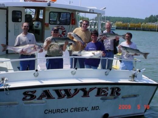 Chesapeake Bay Rockfish