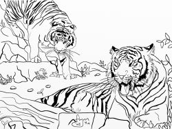 Tigers: Wildlife Colouring Page