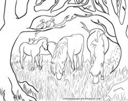 Dartmoor Ponies: Wildlife Colouring Page