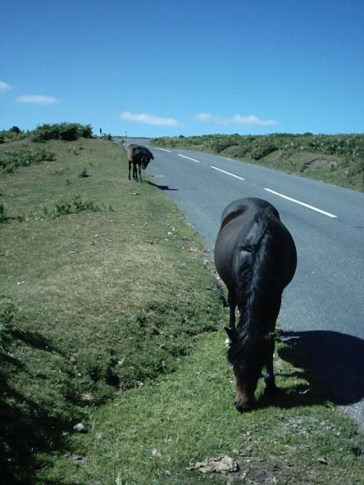 Roadside ponies (stock image)