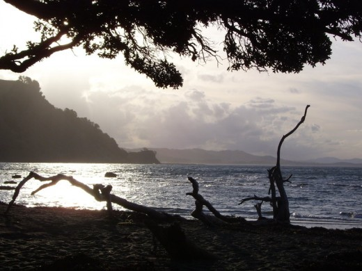 A view from the beach of Goat Island marine reserve