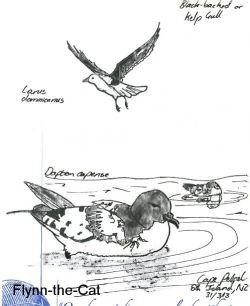 Cape Petrel and Kelp Gull