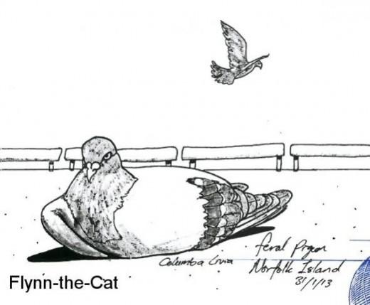 Feral Pigeon, Norfolk Island