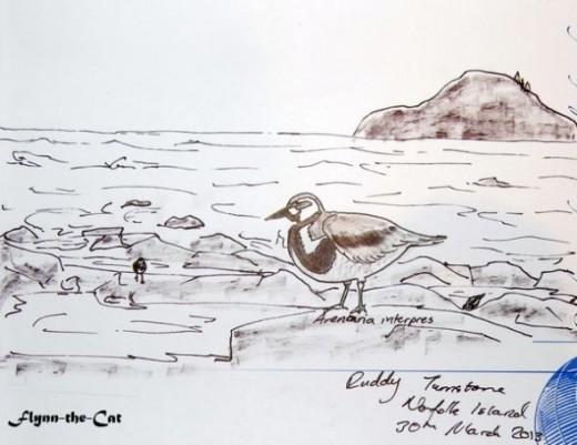 Ruddy Turnstone on the shore