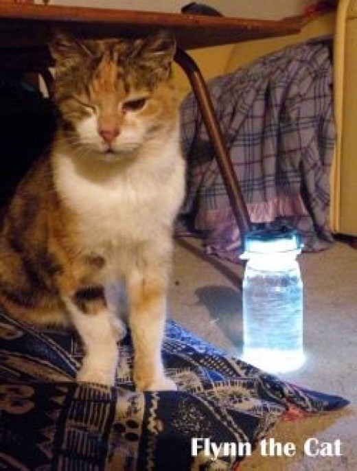 My cat camps out with the glowing solar light