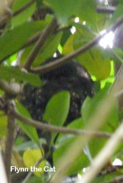 A morepork lurks in the trees. CLick through to learn more about the other native birds of Tiritiri Matangi