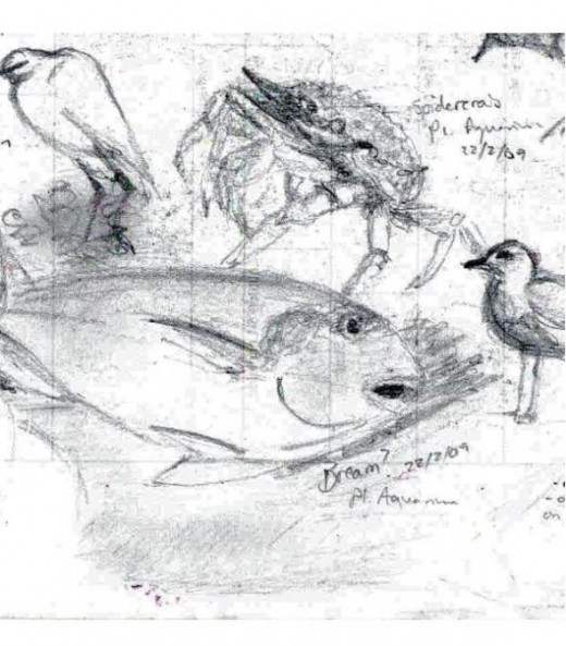 Bream, Spidercrab, half a gull and little egret