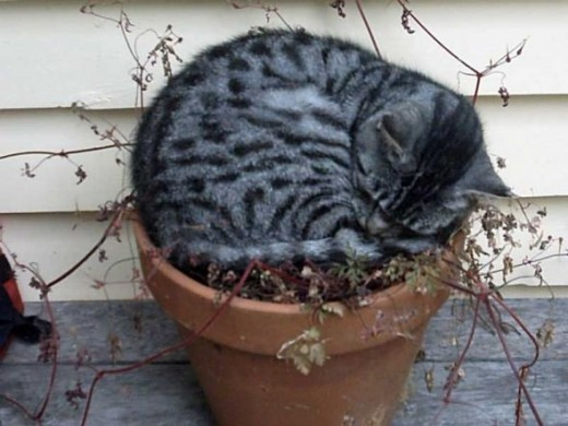 Oh dear. No more gardening for us!
