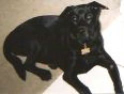 Dog Dominance Behavior