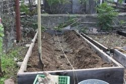 A trench along the trellis line filled with rabbit manure