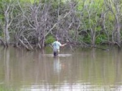 Pond Fishing for Bluegill, a fun way to learn to fly fish