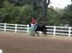 All Horses | Gymkhana | Indiana Flag Race