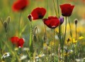 Heat Up Your Garden With Reds