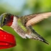 Birdlady LM profile image