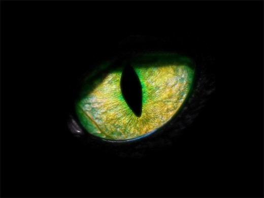 Superstitions Revealed—Where Did They Come From? | HubPages