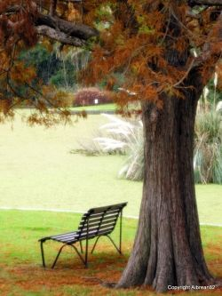 Melbourne, park bench, autumn, writing, writer's block