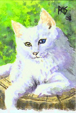 Norwegian Forest Cat by Robert A. Sloan, watercolor.