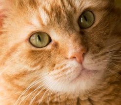 Cancer In Cats -- What You Should Know About Feline Cancer