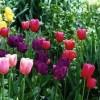 Gardening Gifts!