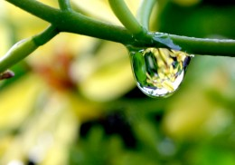 a drop of world
